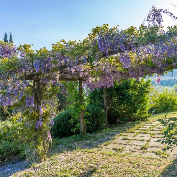 Garden Cappero cottage Masseto in Chianti