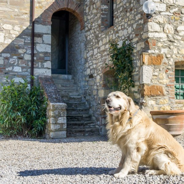 Quinto cottage Masseto in Chianti